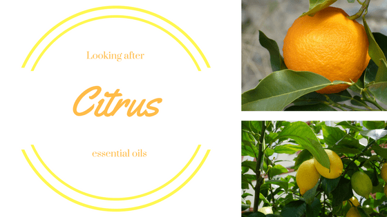 Looking After Citrus Oils